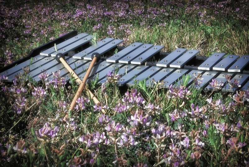 xylophone by ande s